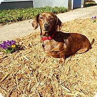Adopt A Pet :: Molly2 - Grand Rapids, MI