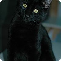 Adopt A Pet :: Ernistine - Buffalo, WY