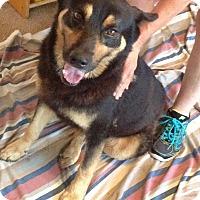 Adopt A Pet :: Rocky - Courtesy Listing - McKinney, TX