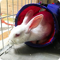Adopt A Pet :: Alpine - Fountain Valley, CA