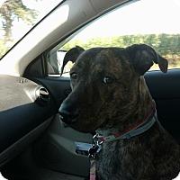 Adopt A Pet :: Bristol - Alden, NY