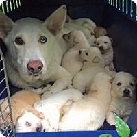 Adopt A Pet :: Molly ( Mama ) - Shingleton, MI