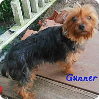 Adopt A Pet :: Gunner - House Springs, MO