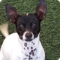 Adopt A Pet :: Luann - Burlingame, CA