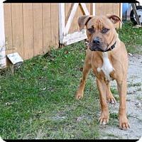 Adopt A Pet :: Bruno - Brick, NJ