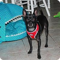 Adopt A Pet :: Luigi - Jupiter, FL