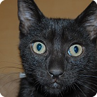 Adopt A Pet :: Joe Joe - Whittier, CA