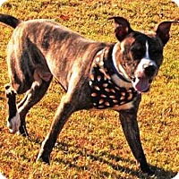 Adopt A Pet :: Briar - Goodlettsville, TN