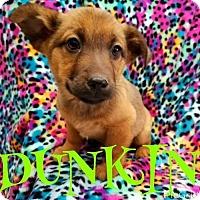 Adopt A Pet :: DUNKIN - Pomfret, CT