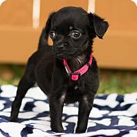 Adopt A Pet :: Serena - Fort Atkinson, WI