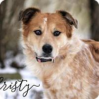 Adopt A Pet :: Christy - Joliet, IL