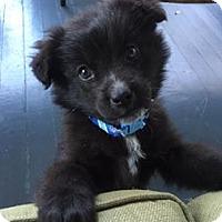 Adopt A Pet :: Sadie - Shaw AFB, SC