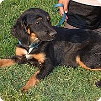 Adopt A Pet :: Moon - Brattleboro, VT
