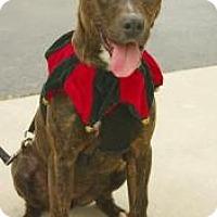 Adopt A Pet :: Ming - Inverness, FL
