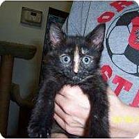 Adopt A Pet :: Sasha - Island Park, NY