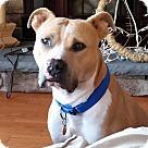 Adopt A Pet :: jaxson
