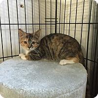 Adopt A Pet :: Jayda - Speonk, NY