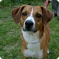 Adopt A Pet :: Darcie - Natchitoches, LA