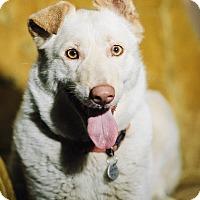 Adopt A Pet :: Asia - Portland, OR