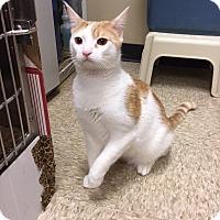 Adopt A Pet :: Nero - Colmar, PA