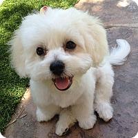 Adopt A Pet :: Sadie - La Quinta, CA