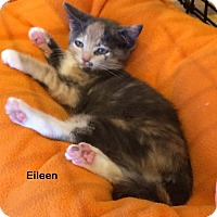 Adopt A Pet :: Eileen - Portland, OR