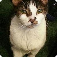 Adopt A Pet :: C-61606 Natalia - Westampton, NJ