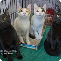 Adopt A Pet :: Benji - Merrifield, VA