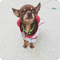 Adopt A Pet :: Diego - Chicago, IL