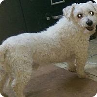 Adopt A Pet :: Bernard - ADOPTED!! - Antioch, IL