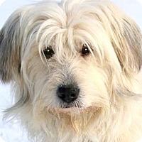 Adopt A Pet :: MICK(ADORABLE