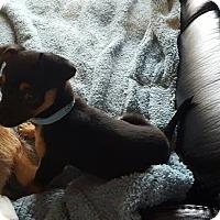 Adopt A Pet :: Otis - Santa Rosa, CA
