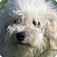 Adopt A Pet :: Jerry - Germantown, MD