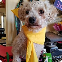 Adopt A Pet :: Cookie- ADOPTED 7/20/16 with Ellie! - Apple Valley, CA