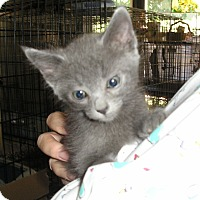 Adopt A Pet :: Sonia - Sherman Oaks, CA