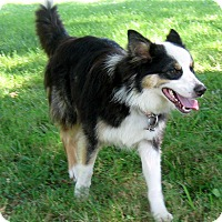Adopt A Pet :: Bandit - All Cities, SC
