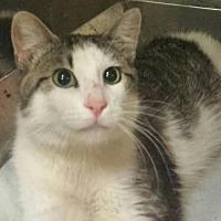 Adopt A Pet :: Tate - Colfax, IA