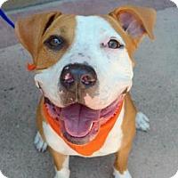 Adopt A Pet :: Aurora - Sunnyvale, CA