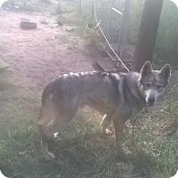Adopt A Pet :: Takota - Ogden, UT