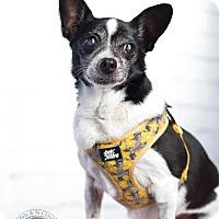 Adopt A Pet :: Grandma - St. Bonifacius, MN