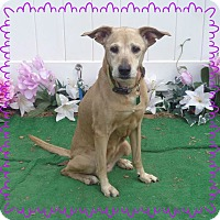 Adopt A Pet :: FARAH - Marietta, GA