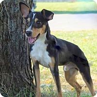 Adopt A Pet :: Rocket (D16-131) - Lebanon, TN