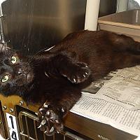 Adopt A Pet :: Salem - Newport, NC