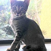 Adopt A Pet :: Squirrel - Royal Palm Beach, FL