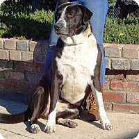 Adopt A Pet :: Allie - Lathrop, CA
