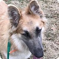 Adopt A Pet :: Honey Bleu Boo - Montgomery, AL
