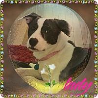 Adopt A Pet :: Lady - Valley Stream, NY