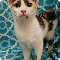 Adopt A Pet :: Aurora - Baton Rouge, LA