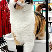 Adopt A Pet :: Gypsy - White Bluff, TN