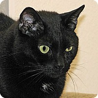 Domestic Shorthair Cat for adoption in Woodstock, Illinois - Jag